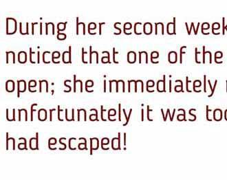 Disappearing Sentence - hancockmcdonald.com/materials/disappearing-sentence